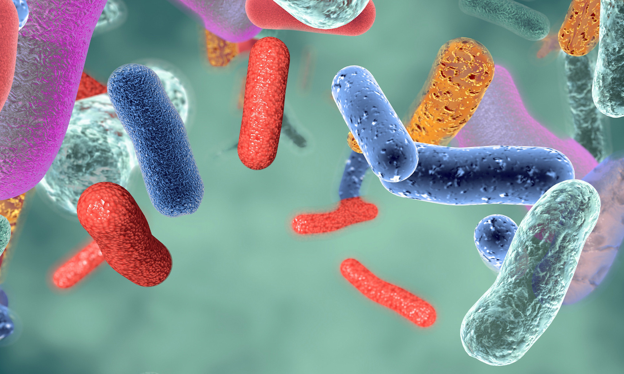 ¿Cuánto tiempo tardan en hacer efecto los probióticos?